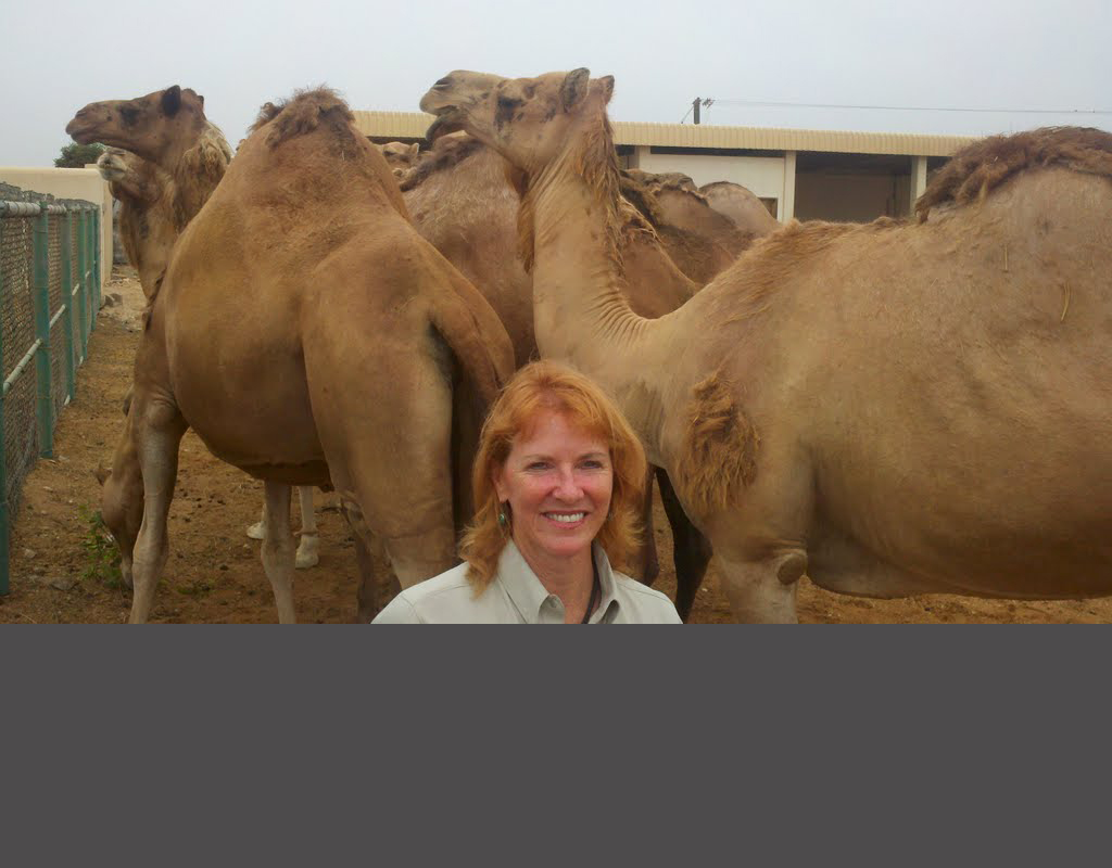 Myakka Cattle Exporter Renee Strickland Flies Cattle Around The Globe