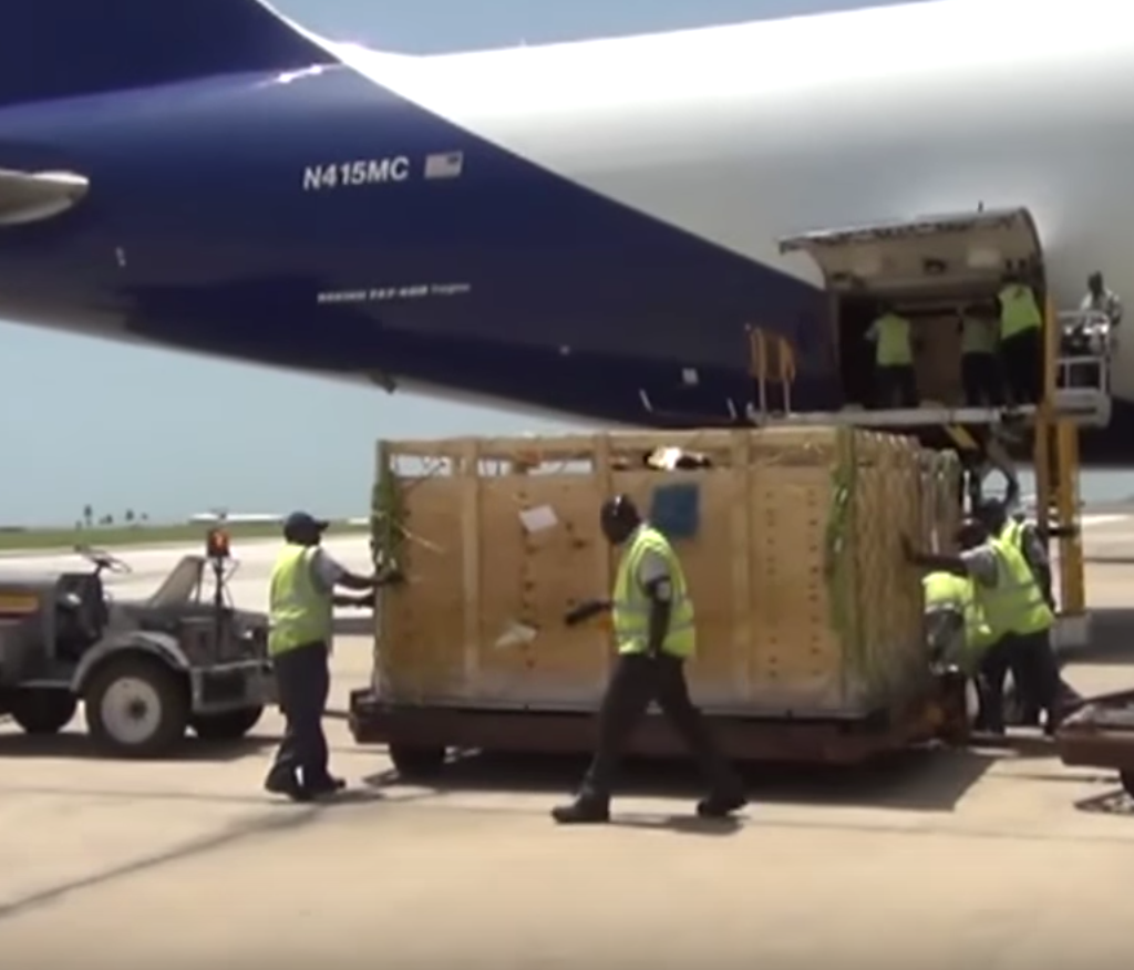 International Shipment Of Cattle To Barbados